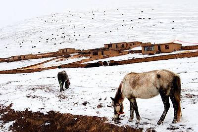 Horses-Outskirts Zhaxika