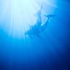 Dolphins at Miami Seaquarium