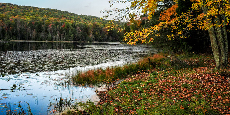 Bays Mountain State Park