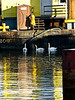 Swans on Fort Point Channel<br /> Inspecting Work during Silver Line Tunnel Project<br /> Panasonic FZ10<br /> January 2004