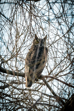 Klamath Wildlife