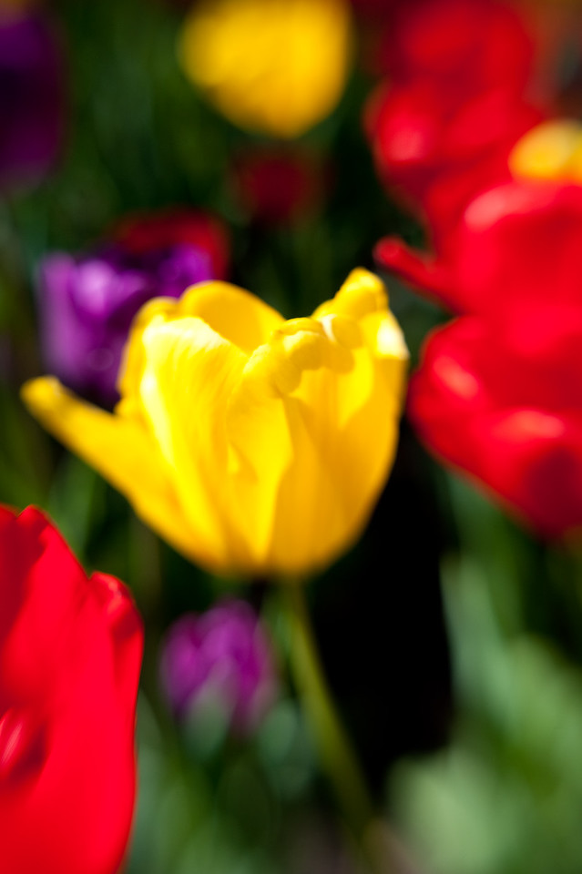 DSC_3419