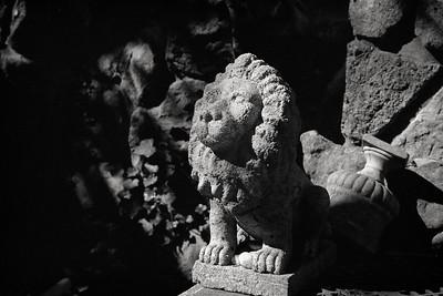 concrete_lion-t0934