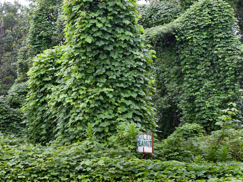 Kudzu and signs often make interesting scenes.