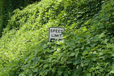 Signs will sometimes be covered in kudzu before highway maintenance crews are able to remove the kudzu.