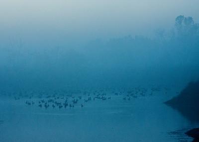1610_geese pond near rail trail_011