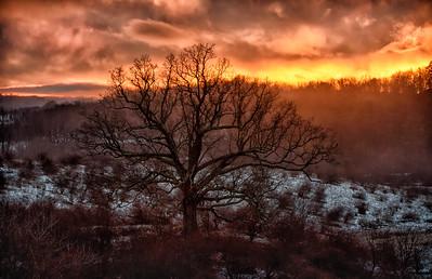 48x31_Winter Sky & Oak Tree Ancramdale_014