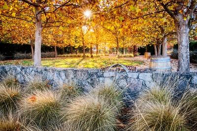 Autumn Colors at Catarina Gardens