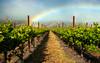 Amaral Vineyard Rainbow, 6/3/10