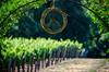 Neyers Estate Vineyard