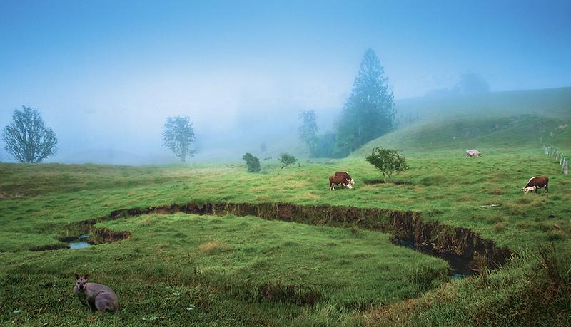 A paddock on a farm on a misty morning.