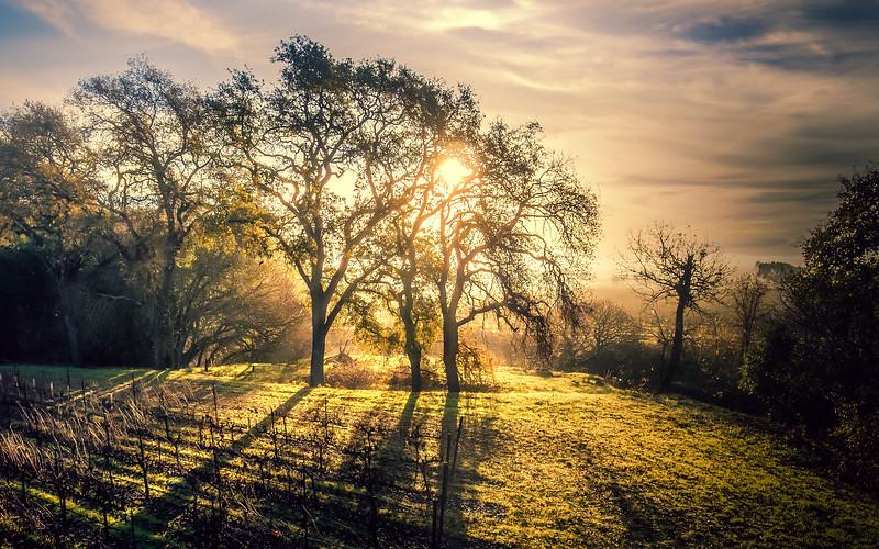 Sun Rays on the Vineyards