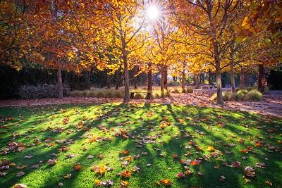 Sunstar at Catarina Gardens