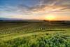 Donnell Ranch & Tallgrass Vineyards, 4/10/11