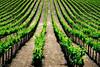 Vineyards... 5/8/13