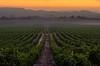 Harvest Sunrise, 9/17/12