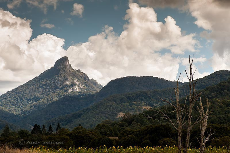 mt warning, landscape