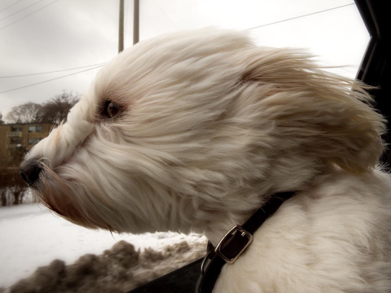 www.christiephotography.ca
