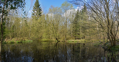 A 3 shot photomerge panorama of a beautiful hidden pond