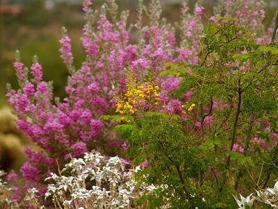 SPRING WILD FLOWERS IN ARIZONA