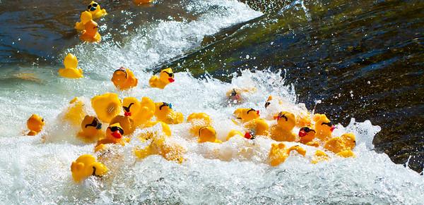 White Water Ducks