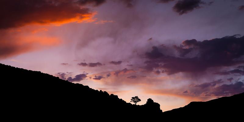 SINGLE TREE AT SUNRISE IN CARSON CITY NEVADA