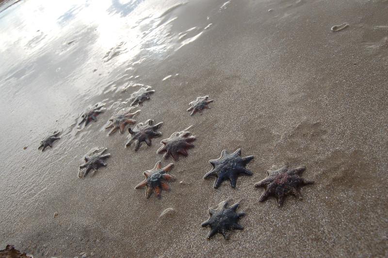 Sandringham Beach, Australia