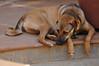 Vico, the Wonder(guard)Dog