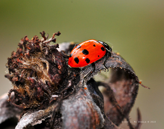 Lady Bugs & Spider 2