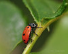 Lady Bugs and Spiders14