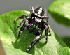 Lady Bugs and Spiders16
