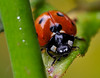 Lady Bugs and Spiders25