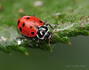 Lady Bugs and Spiders24