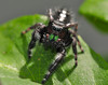 Lady Bugs and Spiders20