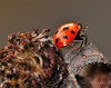 Lady Bugs and Spiders31
