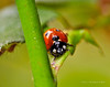 Lady Bugs and Spiders26