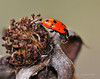 Lady Bugs and Spiders29