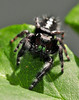 Lady Bugs and Spiders18