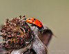 Lady Bugs and Spiders30