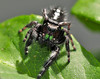 Lady Bugs and Spiders19