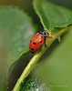 Lady Bugs and Spiders13