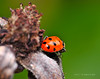 Lady Bugs and Spiders27