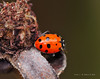 Lady Bugs and Spiders28