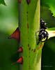 Lady Bugs and Spiders22