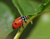 Lady Bugs and Spiders15