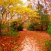 Western NC Fall colors_10-12-12_0019