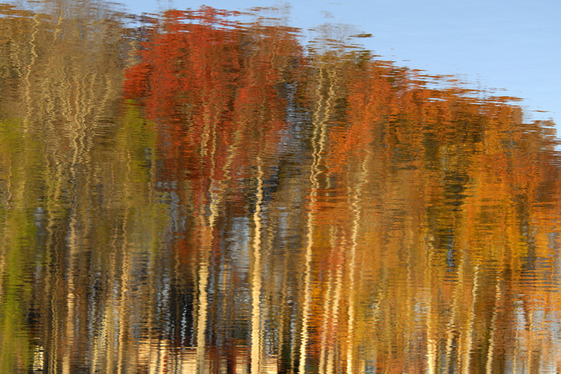 Fall Reflections III
