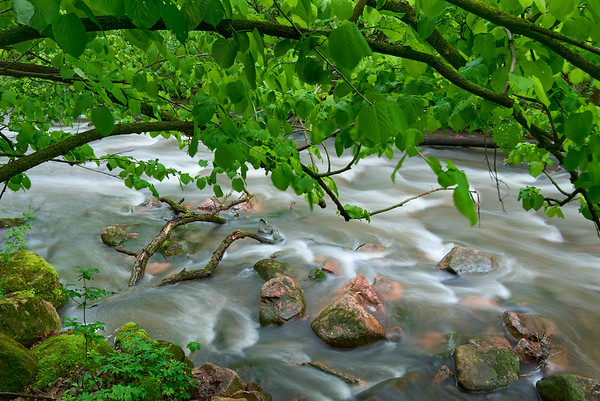 Leaflets over Devils Gulch Creek