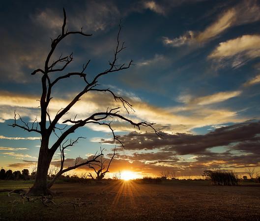 Campbell Swamp. Lake Wyangan, NSW