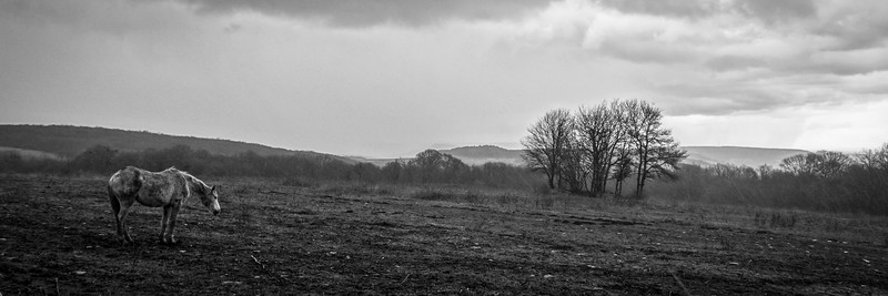 Horse in the Rain, rural Southern France